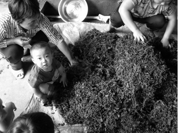 tianzhong_child with tea leaves